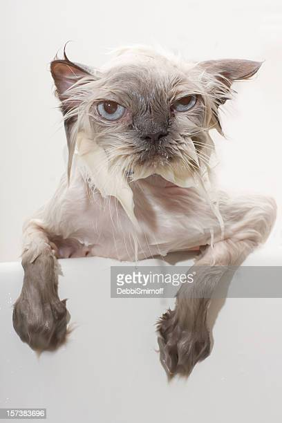 Unhappy Wet Cat