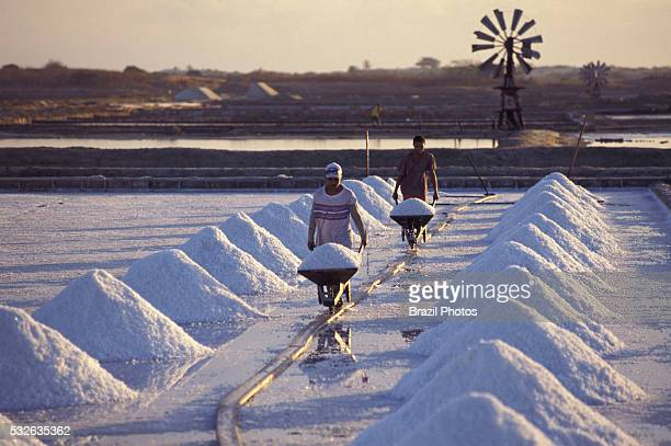 Unhealthy work with no personal protective equipment sea salt harvesting in Rio Grande do Norte State Brazil Due to its semiarid climate in the north...