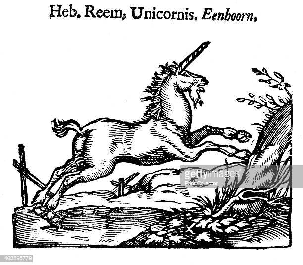 Unicorn 1644 From Handelene van de Natuere a Dutch translation of Natural History by Pliny the Elder the Roman writer on natural history who died in...