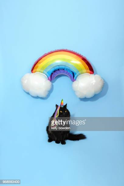 unicorn cat caticorn rainbow balloon gay pride - unicorn stock pictures, royalty-free photos & images