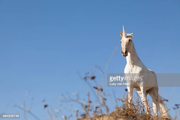 Unicorn on hilltop