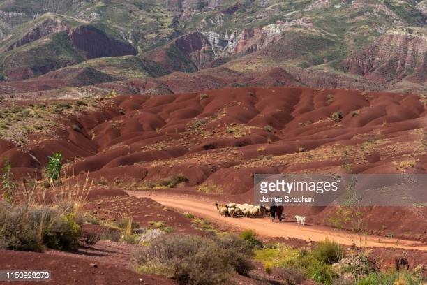 unidentifiable shepherdess and her son taking their flock to new pastures, through 'painted mountain' landscape, potolo, bolivia - james strachan stock pictures, royalty-free photos & images