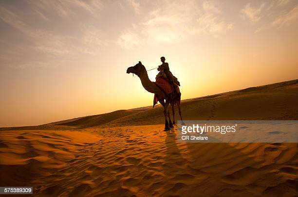 unidentified camels rider tourists - camel stock pictures, royalty-free photos & images