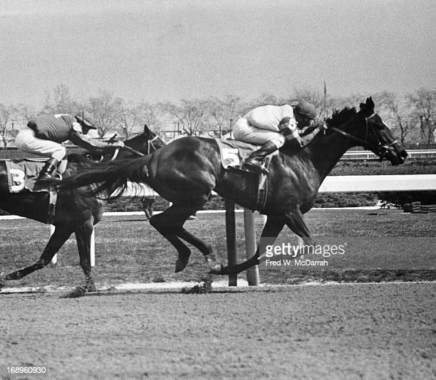 Unidentified horses race at the Aqueduct Racetrack New York New York mid to late 20th century