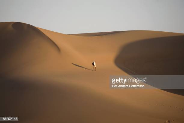 A unidentified man walks with his backpack towards the sand dunes during a walking safari in Namib Desert close the Sand Dunes at Skeleton Coast on...