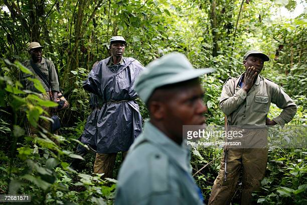 Unidentified rangers walk in the forest looking for endangered mountain Gorillas on September 30 2006 in the Virunga National Park outside Goma DRC...