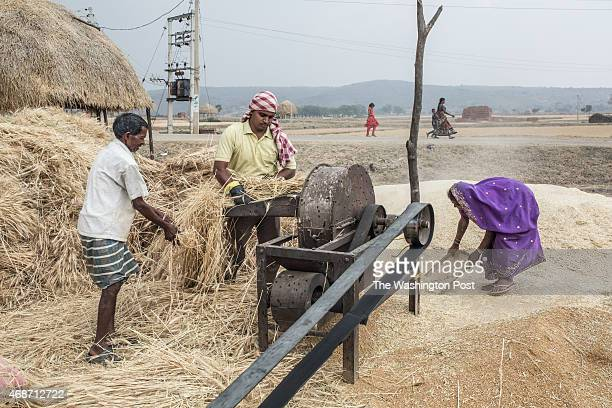Unidentified villagers process their wheat harvest on March 27 2015 in Hazaribagh District Jharkhand Many people from this area oppose the land...