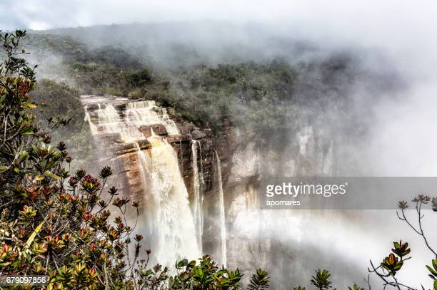 unique panoramic view of churun waterfall on top of the auyan tepui  (auyan tepuy) table top mountain. - angel falls stock photos and pictures