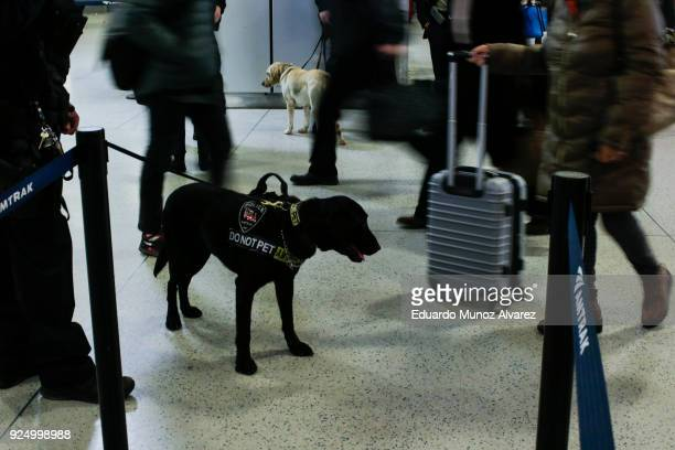 K9 unit sniffs pedestrians as Amtrak police officers work with the new devices designed to detect explosives at New York City's Penn Station on...