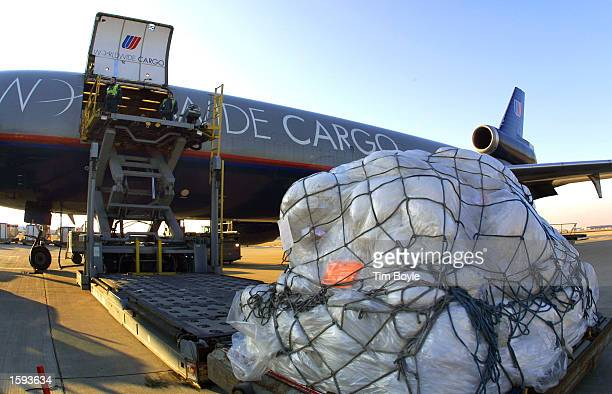United Airlines workers load a DC10 with emergency relief supplies for India's earthquake victims February 12 2001 at O''Hare International Airport...