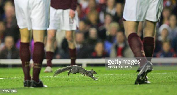 A squirrel invades the pitch during a Champions League semifinal game between Arsenal and Villareal at Highbury in London 19 April 2006 AFP PHOTO/ODD...