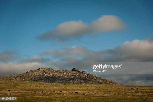 United Kingdom, England, Cornwall, Bodmin Moor, Rough Tor