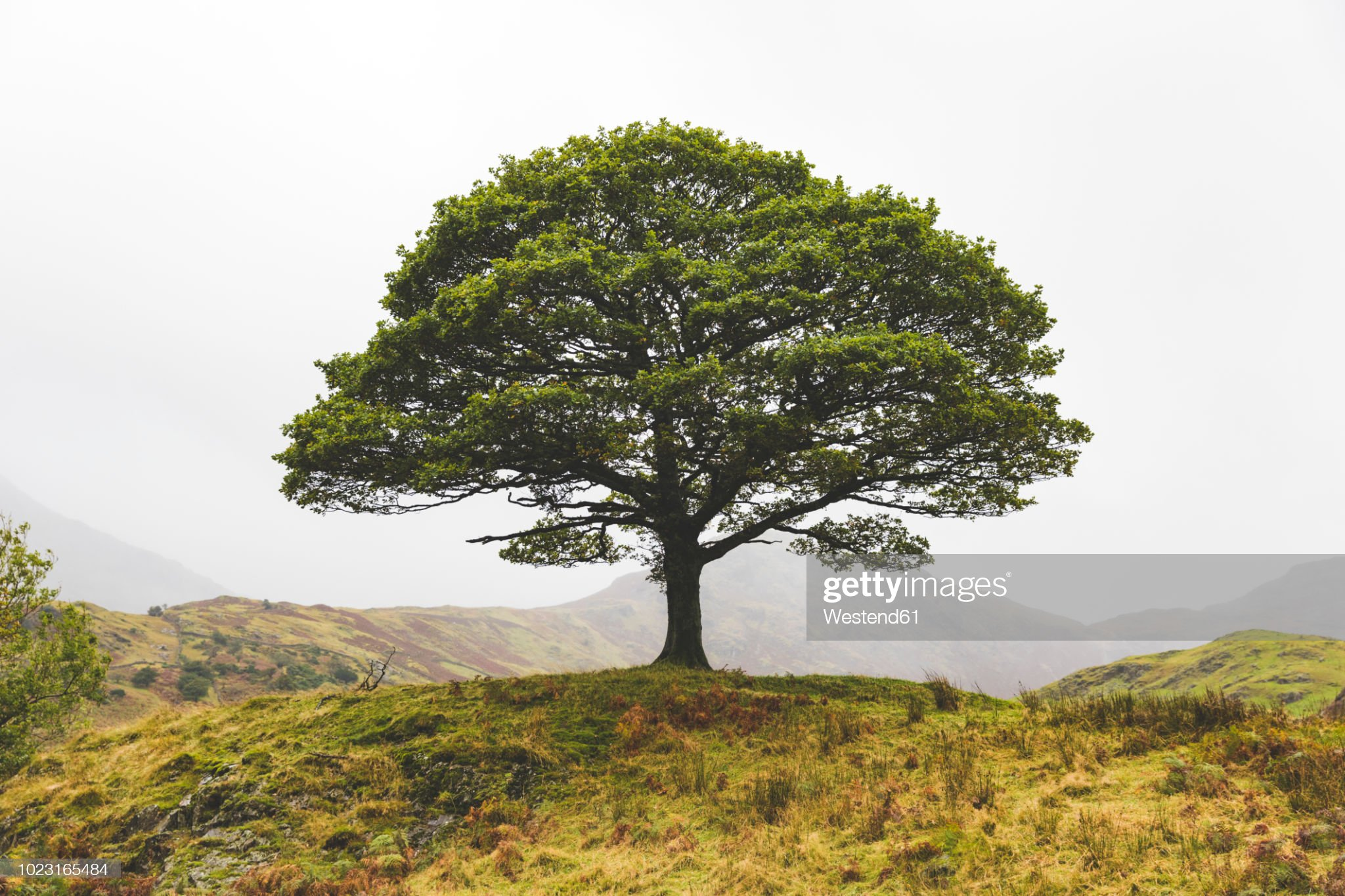 Je ne fais que passer. - Page 2 United-kingdom-england-cumbria-lake-district-lone-tree-in-the-picture-id1023165484?s=2048x2048