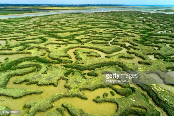 863点の三日月湖のストックフォト - Getty Images