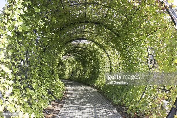 United Kingdom, England, Northumberland, Alnwick, The Alnwick Garden, The Poison Garden, Tunnel.