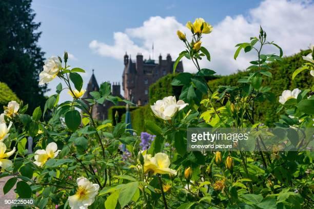 United Kingdom Scotland Angus Glamis flowers in the garden of Glamis Castle Glamis Castle Castle Shakespeare's Macbeth
