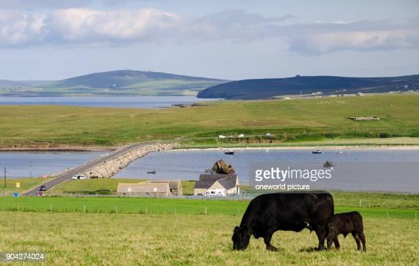 United Kingdom Scotland Orkney Islands Churchill Barriers on the Orkney Islands Churchill Barriers