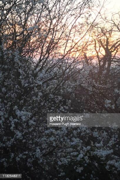 United Kingdom Spring Sunshine in February