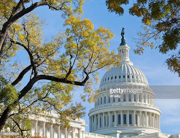 United States Capitol Dome Bordered by Trees in Autumn