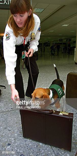 United States Department of Agriculture Canine Officer Jennifer Jones and her K9 partner Quincy demonstrate baggage inspection for hidden meats and...