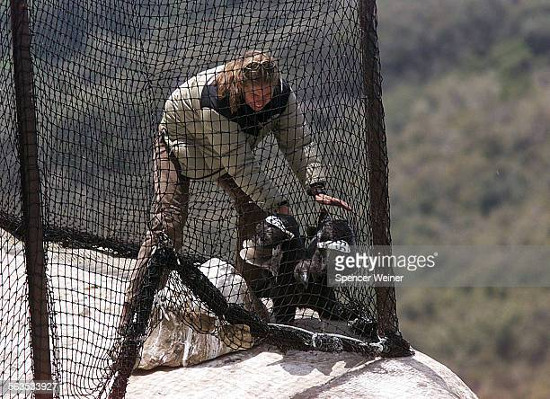 United States Fish and Wildlife Biologist Gretchen Druliner encourages a young condor to exit the holding pen Wednesday May 1 in the Sespe Condor...
