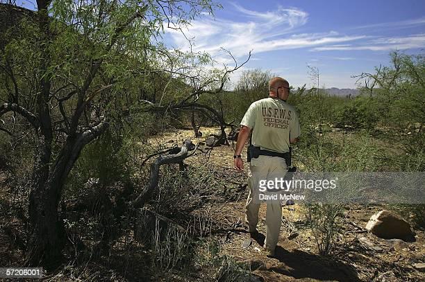 United States Fish and Wildlife Service officer Jeremy Bucher patrols the Cabeza Prieta National Wildlife Reserve on March 27 2006 near Ajo Arizona...
