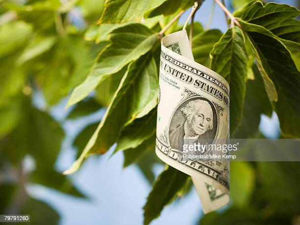 United States one dollar bill on tree with leaves