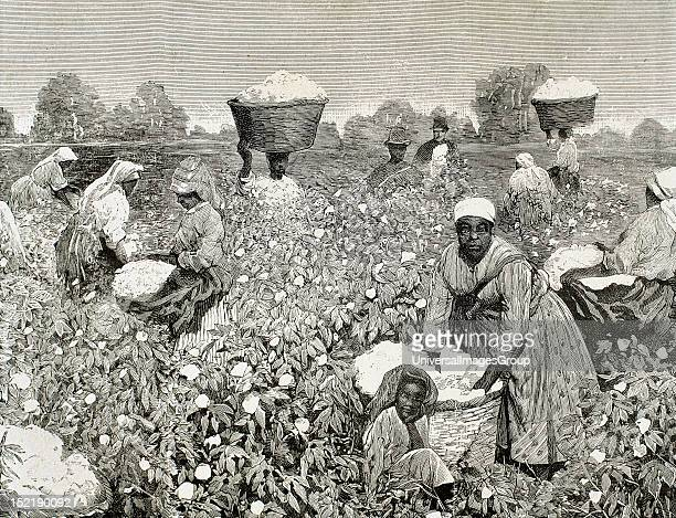 United States Picking cotton Engraving 1878