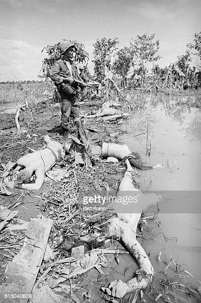 United States soldier walks among dead from a clash with the Vietnamese Marine Battalion This Battle occured in an area bordering on the My Tho River