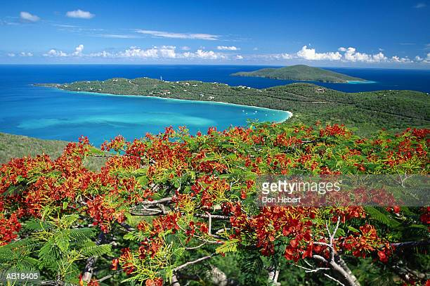 united states virgin islands, saint thomas, magens bay, elevated view - magens bay stock photos and pictures