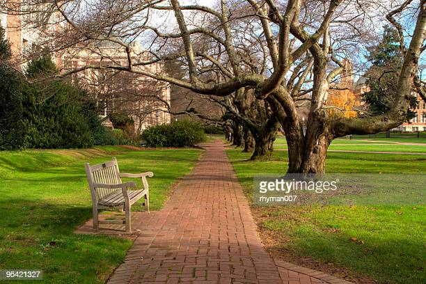 University of Washington Bench