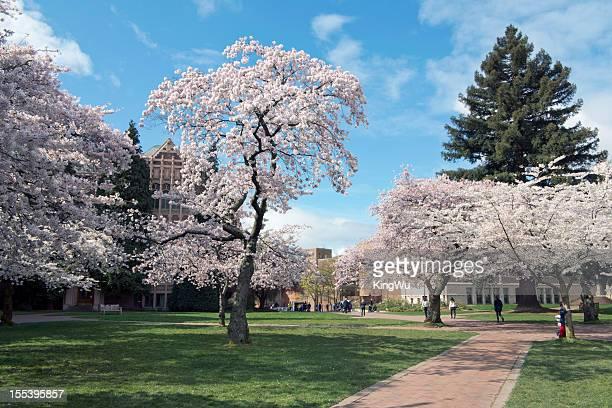 ワシントン大学で春 - ワシントン大学 ストックフォトと画像