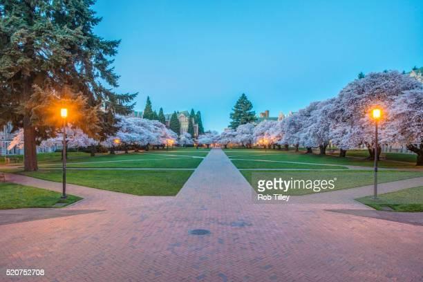 university of wasington quad at dawn - ワシントン大学 ストックフォトと画像
