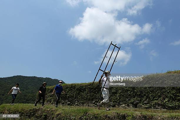 University students prepare to plant rice seedlings in terraced paddy fields in the Nakayama District of Shodo Island Kagawa Prefecture Japan on...