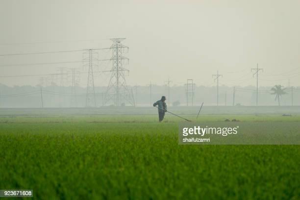 unknown farmer working at paddy field - shaifulzamri stock-fotos und bilder
