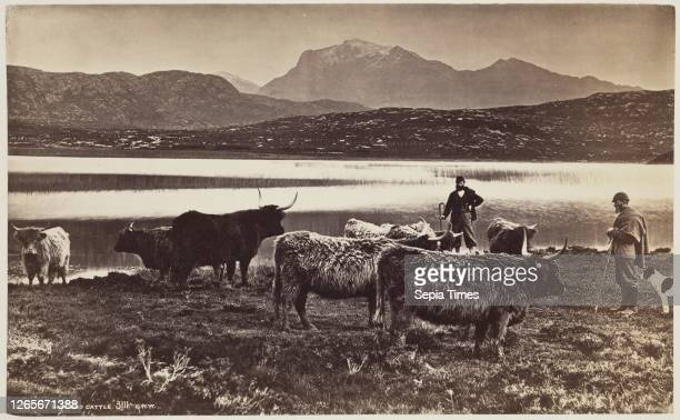 Unknown , George Washington Wilson, Scottish, 1823-1893, Highland Cattle, between 1870 and 1880, albumen print from collodion on glass negative,...