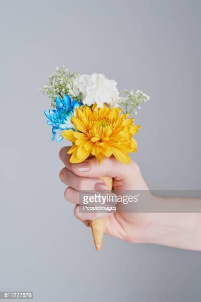 Im Gegensatz zu Blumen haben Sie Kegel jeder Jahreszeit