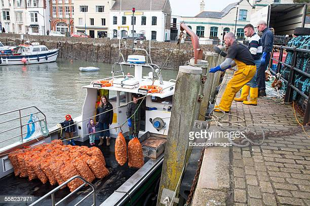 Unloading a catch of shellfish from a small fishing boat in the harbour Ilfracombe north Devon England