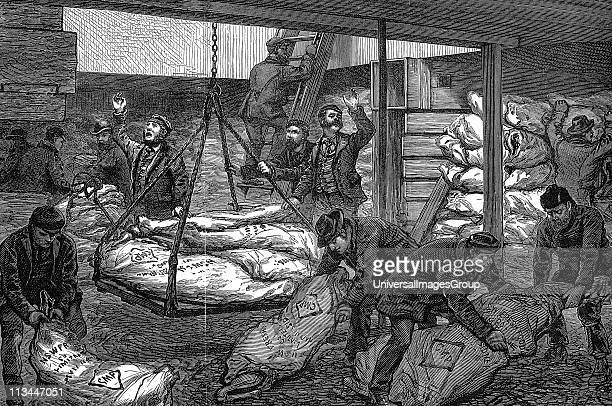 Unloading frozen meat from Sydney Australia in South West India Dock Millwall London Hold of the 'Catania' which sailed on 28 August with nearly 120...