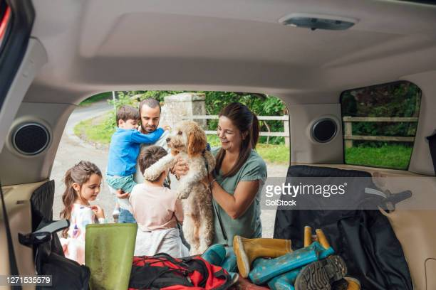 unloading the car - car stock pictures, royalty-free photos & images
