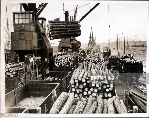 Unloading the huge cargo of tree trunks from Norway, destined for use as pit props in Welsh coal mines, at Swansea Docks, Swansea, South Wales.