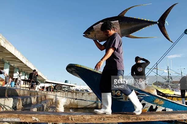 unloading yellowfin tuna - yellowfin tuna stock photos and pictures