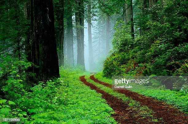 unpaved road in redwoods forest - en:public_domain stock pictures, royalty-free photos & images