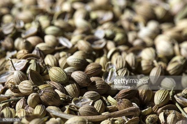 Unprocessed coriander seeds are seen at a Suhana spice factory in Pune Maharashtra India on Monday Nov 28 2016 India is scheduled to release...
