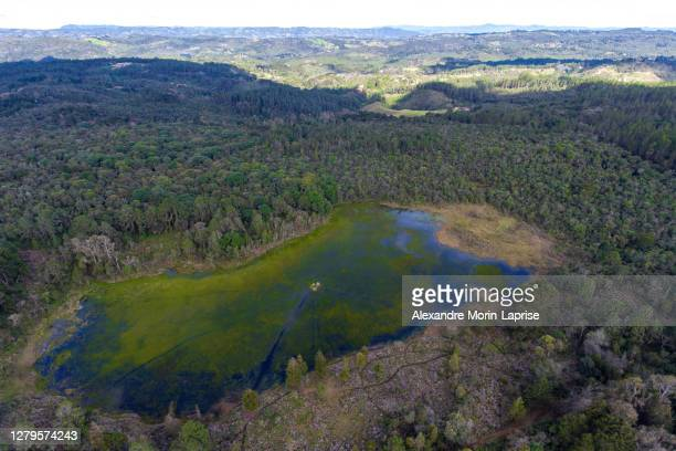 unreal green and humedal lagoon with grass in the middle near medellin, antioquia / colombia - colombia land stockfoto's en -beelden