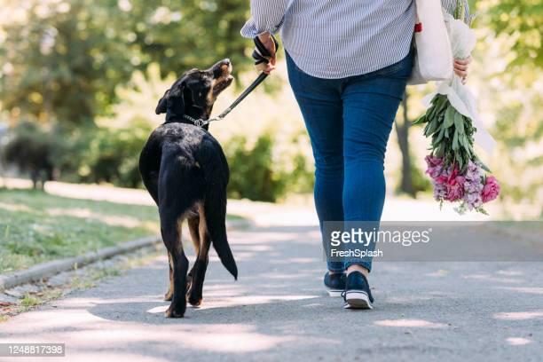 donna irriconoscibile che cammina con un cane nero nel parco - big fat women foto e immagini stock