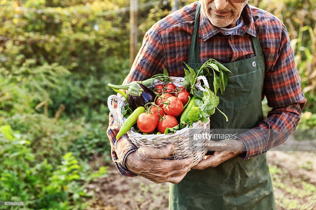 Unrecognizable farmer carrying basket with vegetables : Stock Photo