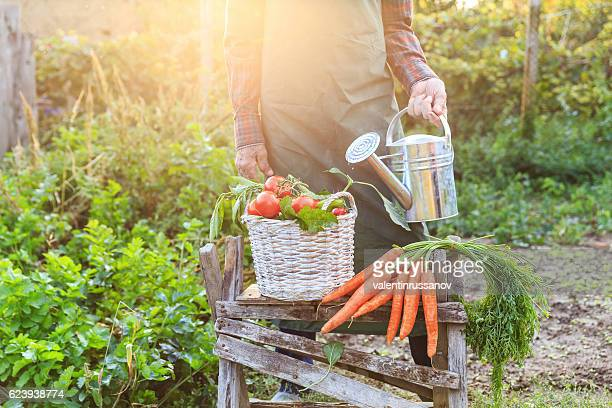 Unrecognizable farmer standing behind a basket with vegetables