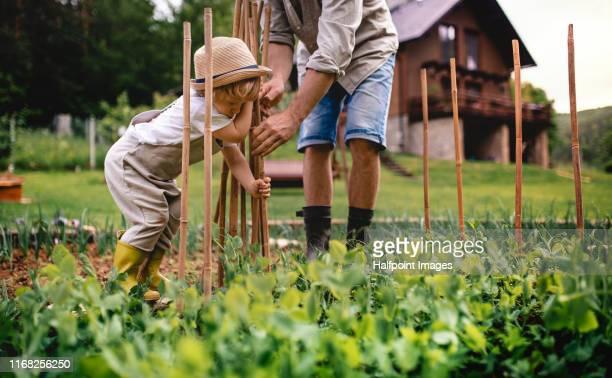 unrecognizable father with small child outdoors gardening. - nicht erkennbare person stock-fotos und bilder