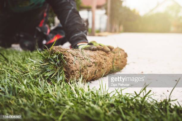 unrecognizable man laying down sod rolls - turf stock pictures, royalty-free photos & images